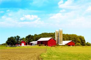 Organic produce more affordable through local farmer