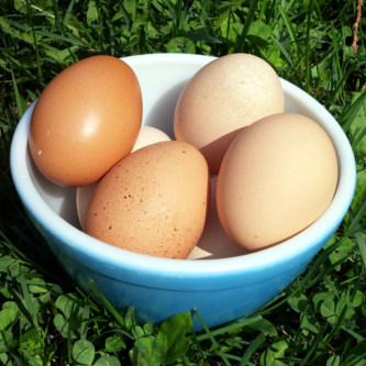 Free range road trip breakfast eggs