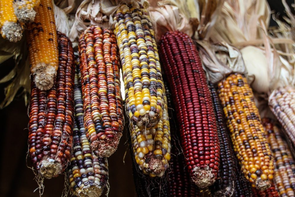 Corn is one of the most common food sensitivities and intolerances